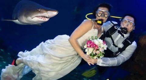 bodas entre tiburones